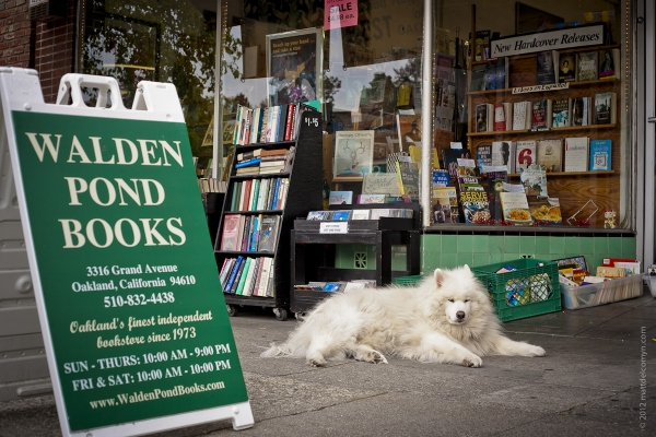 The dogs of walden pond books oakland california for Local pond stores